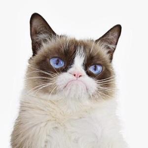 <center><b>Сердитый котик посетил Лондон</center></b>