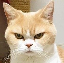 <center><b>Кот со стервозным лицом набирает популярность</center></b>