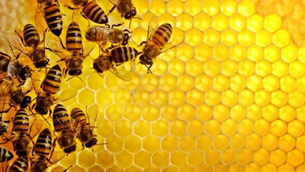 <center><b>Британцы создали шикарный отель для пчел</center></b>