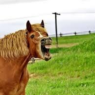 <center><b>Британцы спорят из-за ржущей лошади</center></b>