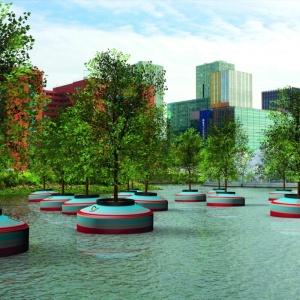 <center><b>Деревья вырастут на воде</center></b>