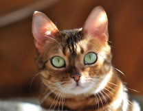 <center><b>Три мамочки для кошки</center></b>