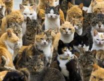 <center><b>Коттедж для кошек</center></b>