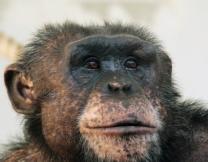 <center><b>В Екатеринбурге выбрали самую умную обезьяну</center></b>