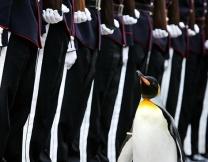 <b>В Норвегии появился генерал-пингвин</b>