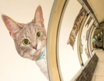 Котики захватили метро Лондона
