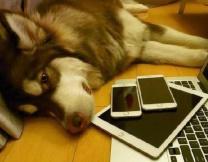Собака-гаджетоман из Китая