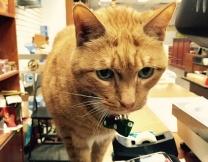 Рыжий кот 9 лет управляет магазином