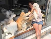 Новая звезда Instagram и её кошки