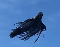 Американцев напугал летающий дементор