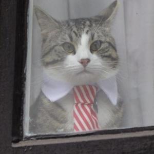 Много шума из-за кота в галстуке (видео)