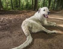 Пёс виляет самым длинным хвостом (видео)