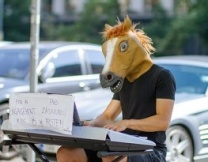 Австралийская лошадь играет на пианино (видео)