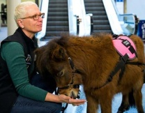 Американские лошади-лекари (фото)