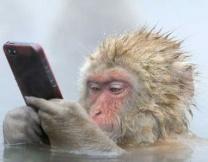 Британская обезьяна сделала сэлфи