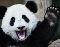 Электростанция-панда в Китае