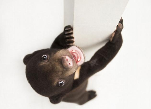 Самый милый медвежонок в мире
