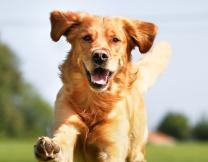 Собачья лежачая забастовка