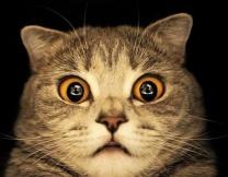 Самые популярные коты рунета