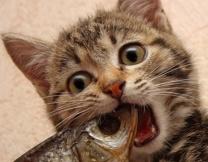 Гнев сделал кота звездой