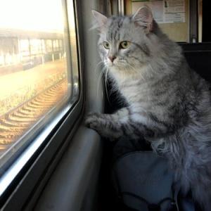 <center><b>Австралиец целый год путешествует с кошкой</center></b>