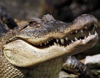Крокодил сожрал имущество австралийца