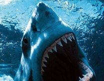 В Австрии оштрафовали акулу