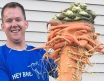 Самая большая в мире морковка