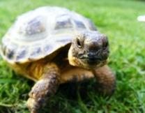 Черепахи пытались сбежать из зоопарка (фото)