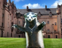 Нахальный барсук захватил замок в Шотландии