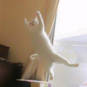 <center><b>Кот из Японии полюбил балет</center></b>