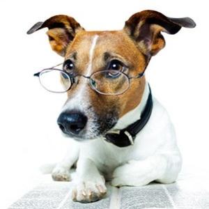 Самый умный в мире пес (фото)
