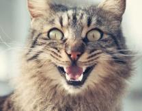 Первое «мяу» кота спасло его хозяев