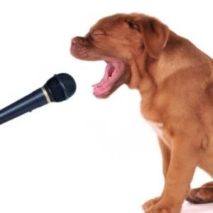 Сенсация! Собака спела лучше человека
