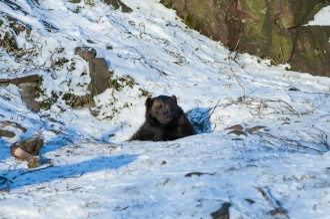 Спящий медведь активизировал власти Снежинска