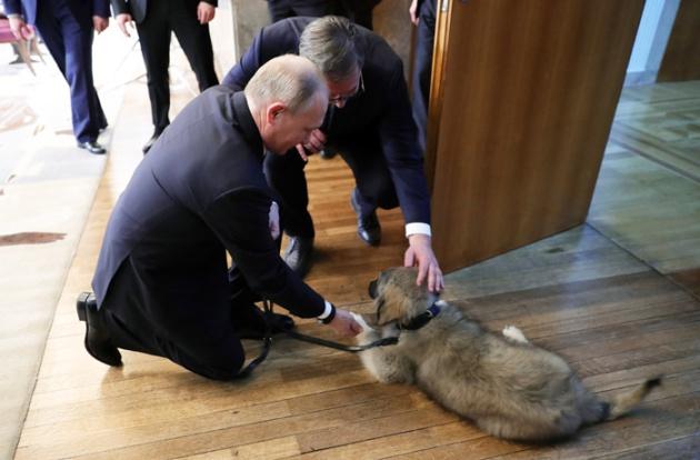 Путину подарили щенка-гиганта