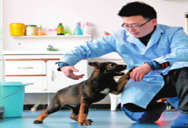 Клонированная собака из Китая стала полицейским