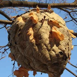 <center><b>В Испании нашли огромный пчелиный улей</center></b>