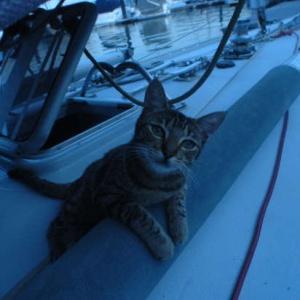 <center><b>Кошка на яхте стала звездой Инстаграма</center></b>