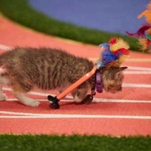<center><b>Милейшая Олимпиада для котят (видео)</center></b>