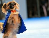 <center><b>Москвичи потанцуют с собаками</center></b>