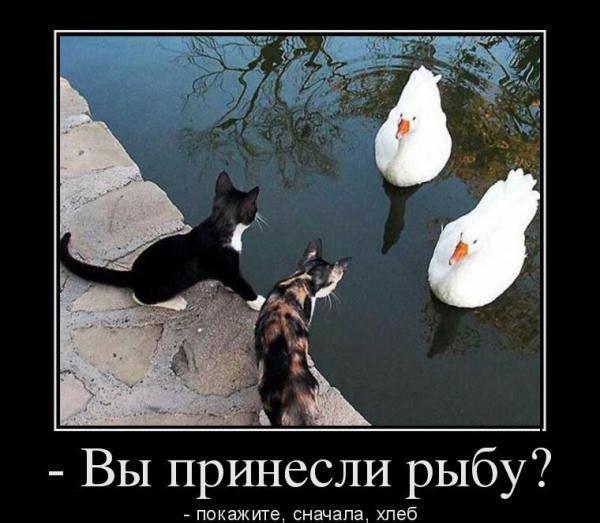 http://www.veseloeradio.ru/vardata/modules/lenta/images/320000/303592_1_1448571169.jpg
