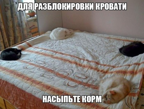 http://www.veseloeradio.ru/vardata/modules/lenta/images/320000/303699_1_1448654123.jpg