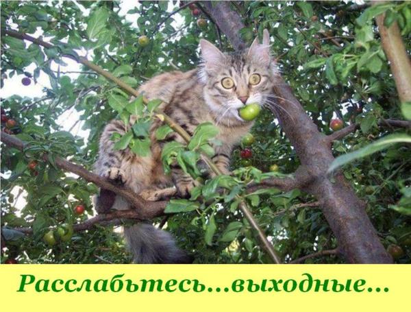 http://www.veseloeradio.ru/vardata/modules/lenta/images/320000/303711_1_1448654529.jpg
