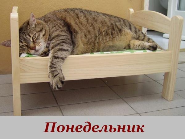 http://www.veseloeradio.ru/vardata/modules/lenta/images/320000/303842_1_1448825820.jpg