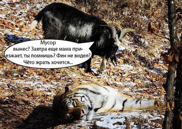 http://www.veseloeradio.ru/vardata/modules/lenta/images/320000/305207_1_1449931953.jpg