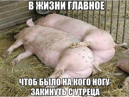 http://www.veseloeradio.ru/vardata/modules/lenta/images/320000/305358_1_1450041755.jpg