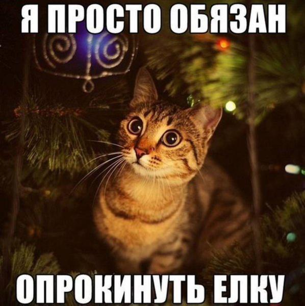 http://www.veseloeradio.ru/vardata/modules/lenta/images/320000/305618_1_1450197738.jpg