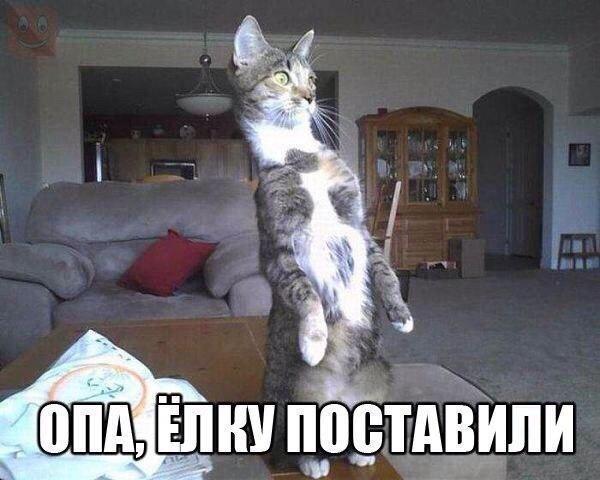 http://www.veseloeradio.ru/vardata/modules/lenta/images/320000/305853_1_1450383396.jpg