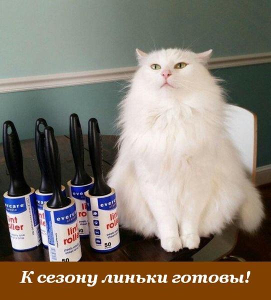 http://www.veseloeradio.ru/vardata/modules/lenta/images/320000/305963_1_1450472108.jpg